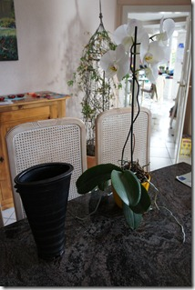 Vase and orchid on my dining table
