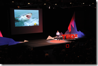 Andrew Sharman - swimming with sharks (that's me in the 2nd row)