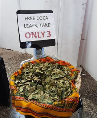 Free coca leaves at the airport