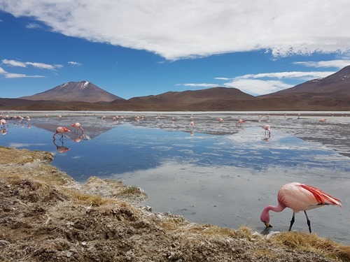 Laguna Hedonda with flamingo