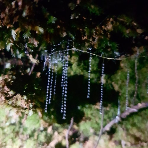 Glowworm threads