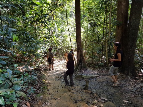 Walking through the jungle near Puchong