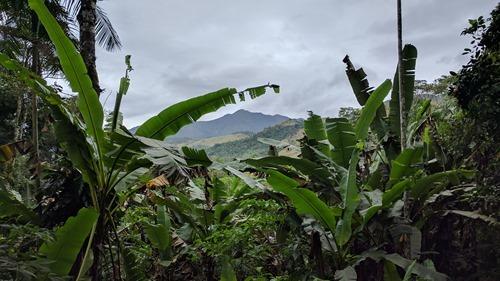 Some jungle foliage