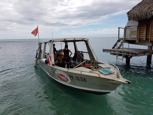 Off for the dive