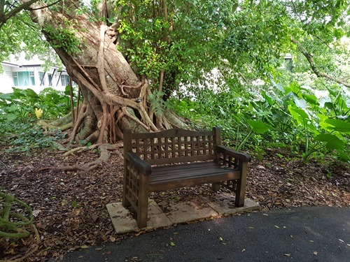 A bench in the Botanical Gardens