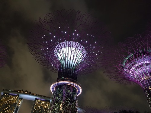 The super-trees at Gardens by the Bay