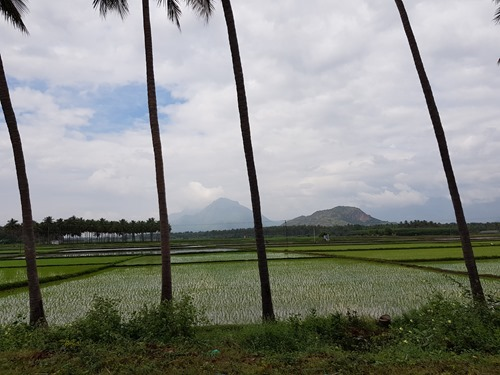 Paddy fields by the road on our drive