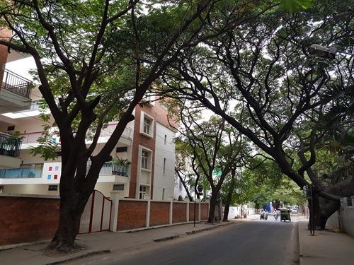Trees in Bangalore