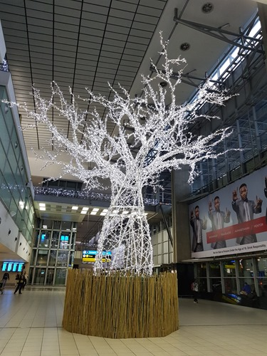 A nice tree in the airport