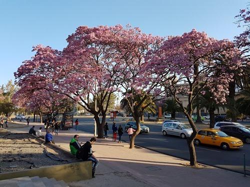 Blooming trees