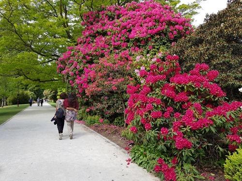 The botanical gardens in Queenstown