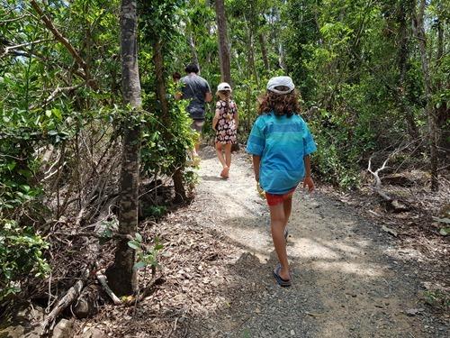 A bush walk