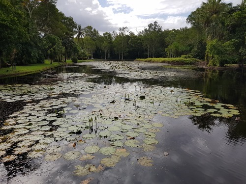 A nice pond