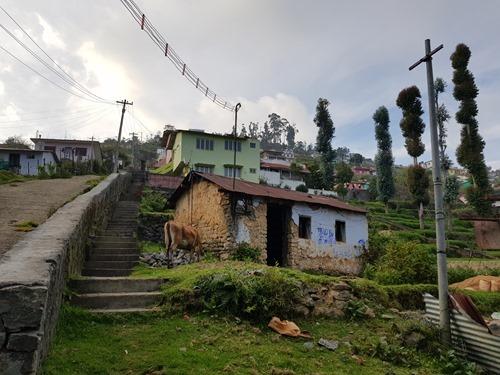 A hillside view