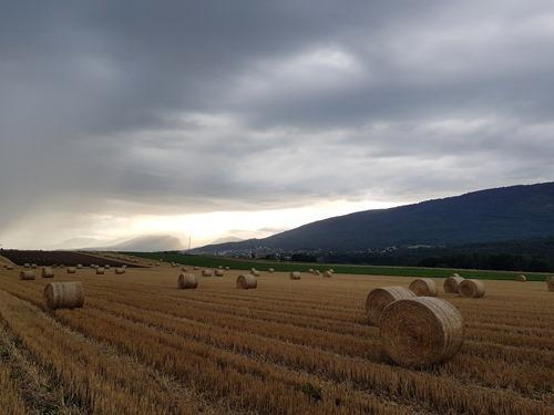 An early harvest