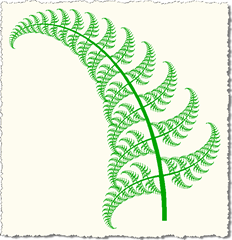 More curved fern