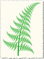 Slightly curved fern